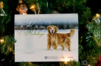 Merry Christmas from Oliver and the Western College Veterinary Medicine