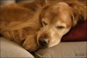 not sleeping on the brand new sofa