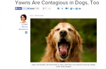 Dog Yawns – Kael in the news