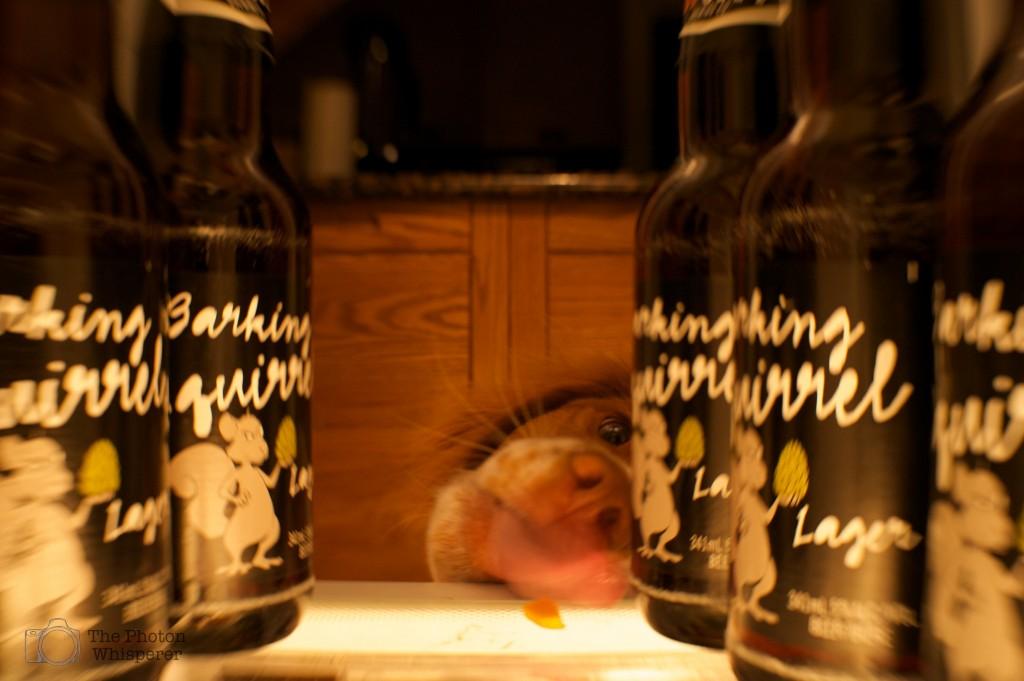 3-52 barking squirrel 4