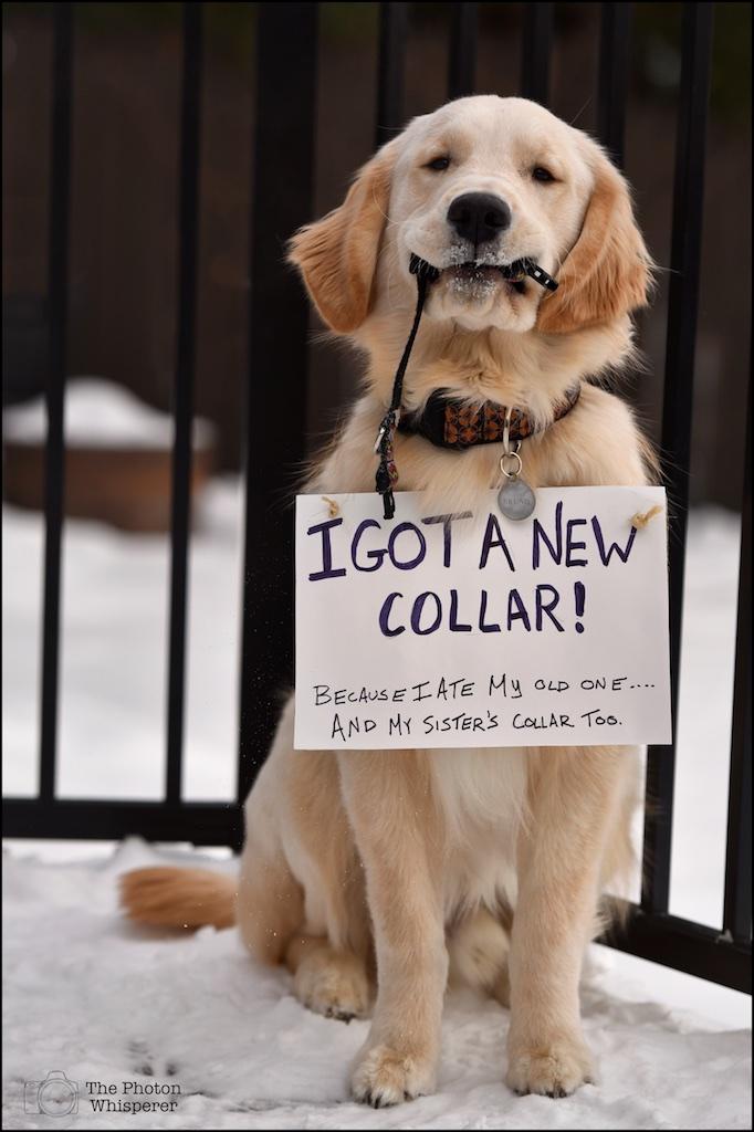 2-52 new collar