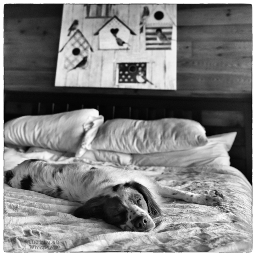 what do bird dogs dream about