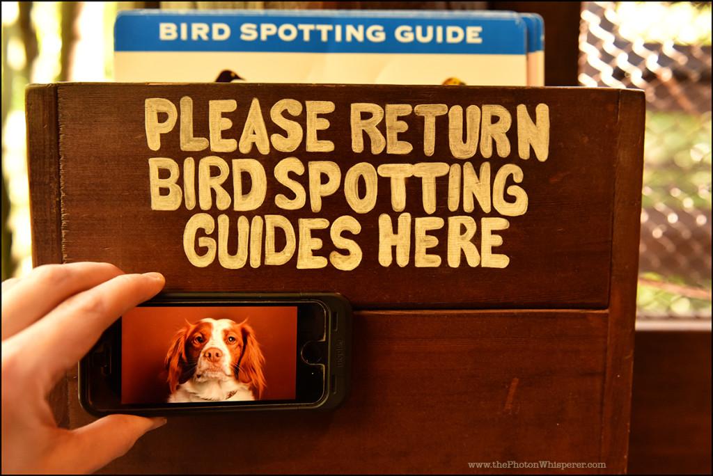 bird spotting guide
