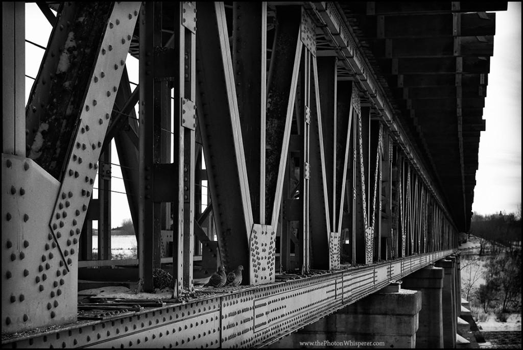rail bridge birds