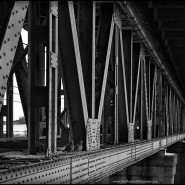 "26 bridges ""rail bridge birds"""