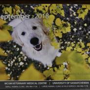 WCVM 2018 Calendar – Mr. September